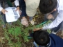 Class 6 Research project on Natural vegetation – ISL Campus